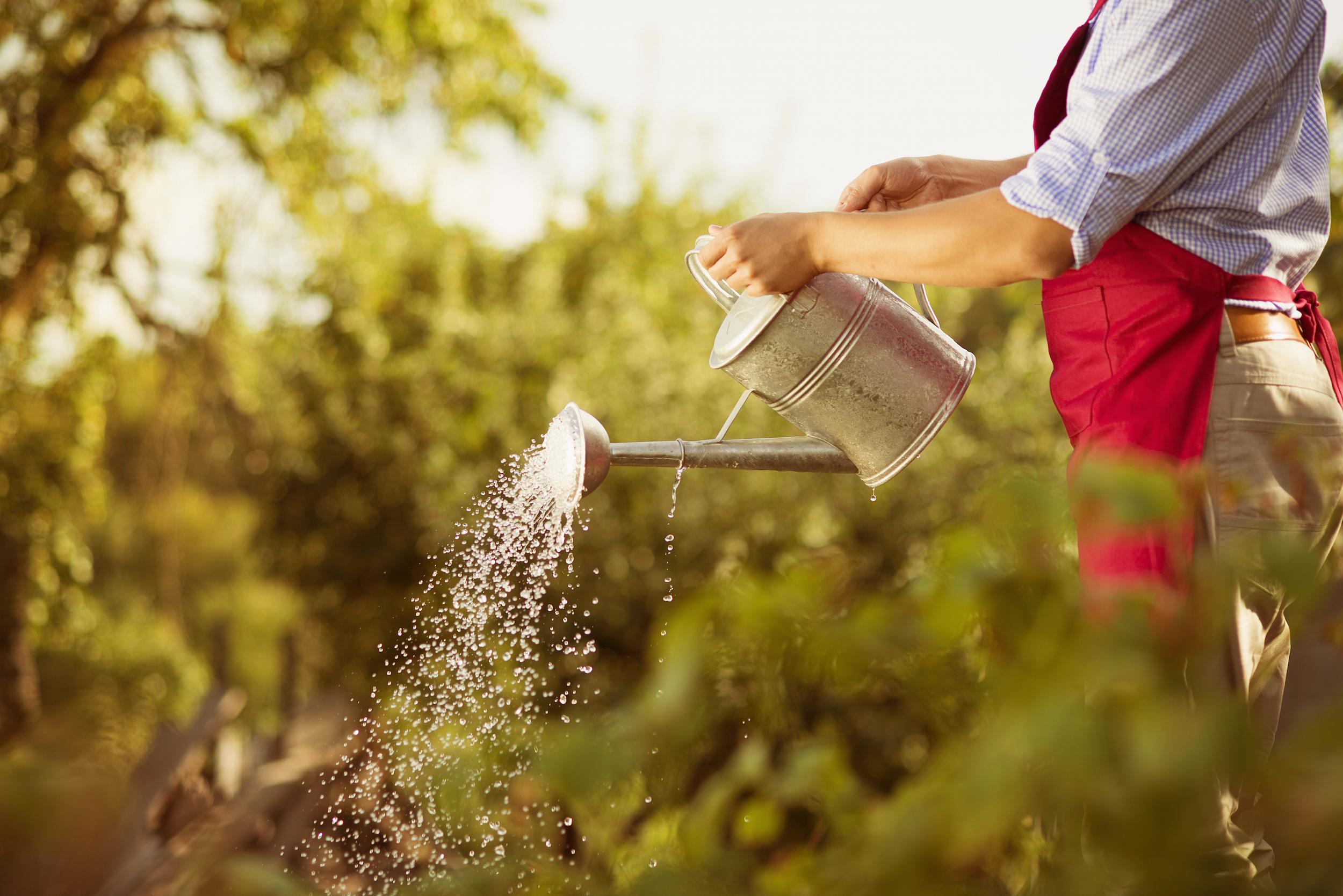 The Humble Vegetable Garden: A Fun, Health-conscious Home Project ...