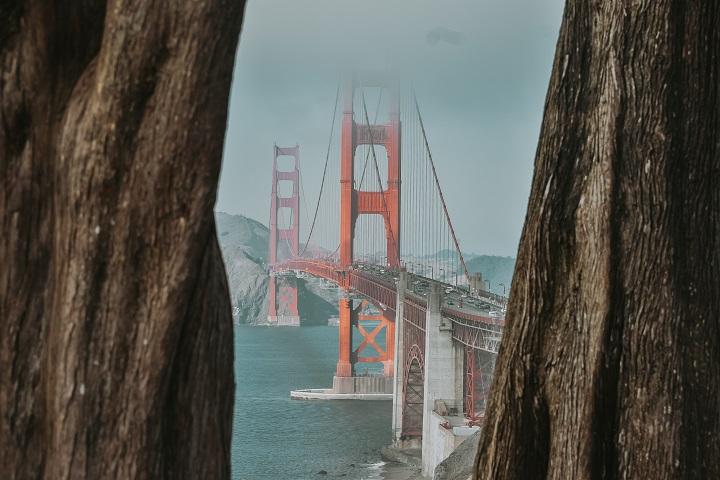 Golden Gate Bridge and California redwoods