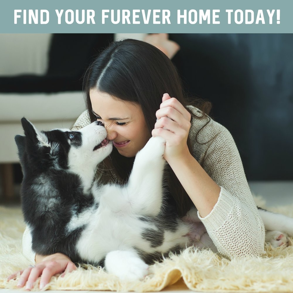 Find your home here